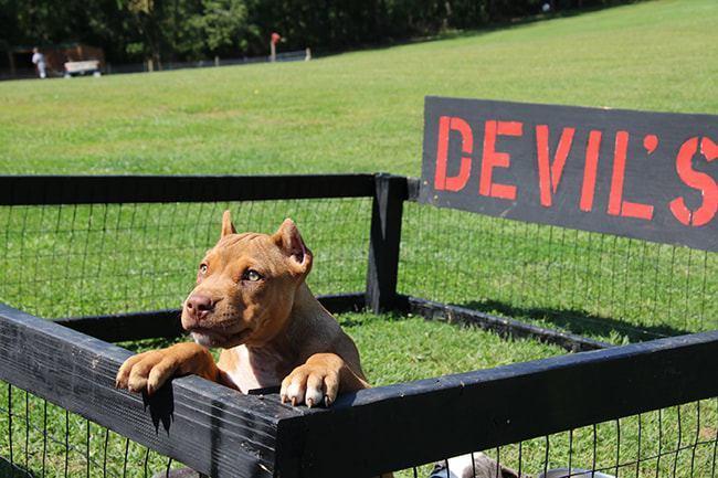 devils-den-bullies-RedHook-030