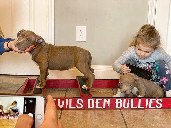 devils-den-bullies-ancestors-158