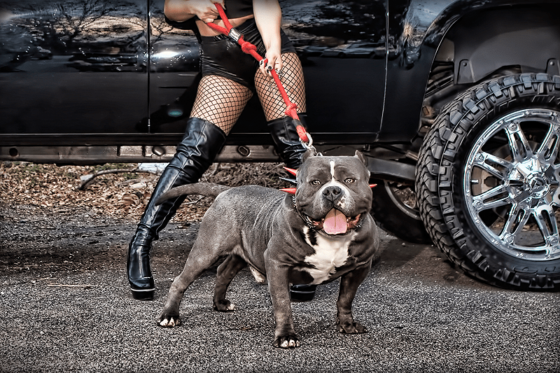 devils-den-bullies-chicks-with-pits-050