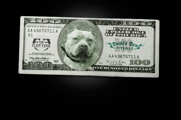 devils-den-bullies-doggy-style-023