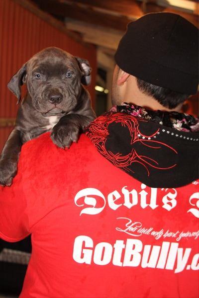 devils-den-bullies-doggy-style-043