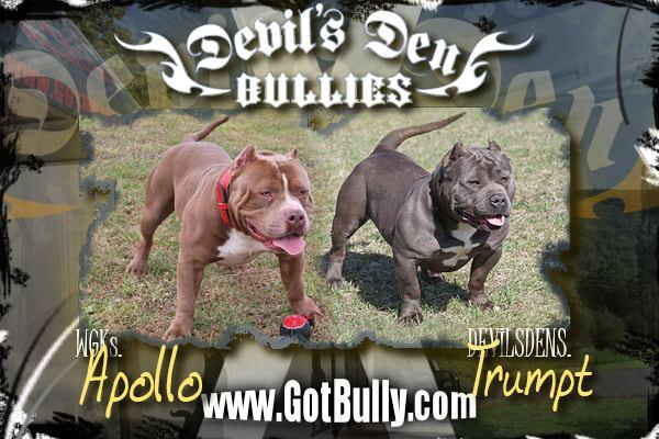 devils-den-bullies-history-008