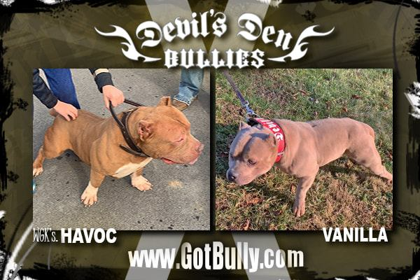 devils-den-bullies-history-010