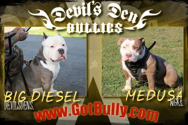 devils-den-bullies-history-073