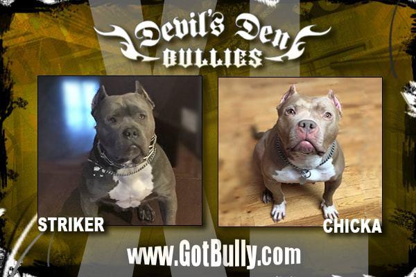 devils-den-bullies-history-085